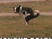 Pies robi kupę - dzień świra w realu! Halo policja?