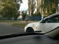 Kierowca pomaga psu przejśc przez droge