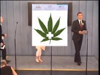 PILNE ! Konferencja prasowa Kukiz'15 na temat Legalizacji Marihuany medycznej - 25.08.2016