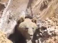 Ratowanie uwięzionego niedźwiadka