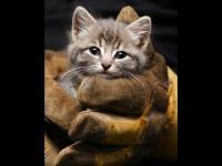 Ratowanie przytkanego kotka