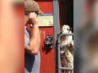 Rozmowa z kozłem