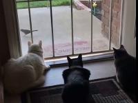 Podstawowa różnica między kotami a psami