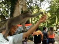 Szybki małpii numerek