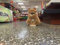 Kot pracujący w sklepie