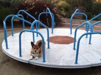 Zabawy z psem na karuzeli
