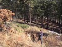 facet postanowił wyciąć drzewo