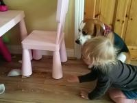 Winny pies i reakcja dziecka na jego