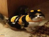 Halloweenowe kocie stroje