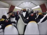 Imprezowe Pingwiny