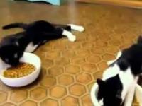 Koty na haju