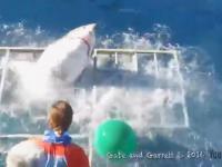 Rozwścieczony rekin biały wpada do klatki w której jest nurek