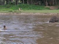 Słoń rusza z pomocą człowiekowi