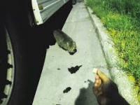 Kierowca ciężarówki karmi kota na parkingu