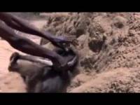 Afrykański sposób na odnalezienie wody