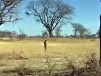 Co zrobić żeby małpa zaprowadziła Cię do wodopoju?