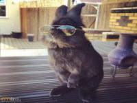 Wyjątkowo memogenny królik