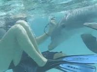 Delfin też ma potrzebę