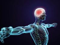 10 błędów, które ewolucja popełniła w naszym ciele