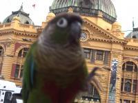 Wypad z ptaszkiem na miasto, na obiadek