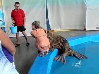 Lew morski korzysta z okazji