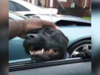 Pies wybiera sobie nowego właściciela