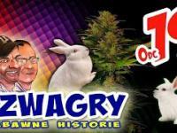 Szwagry - Odcinek 19