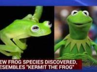 Kermit odnaleziony w Kostaryce