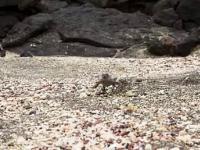 Dużo wężów kontra Jaszczurka