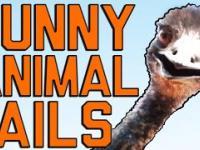 Śmieszne zwierzęce faile