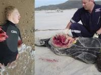 10 ataków rekinów na ludzi