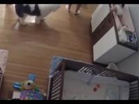9 letni chlopiec ratuje młodszego brata