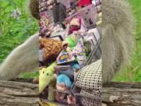 Monkey do...