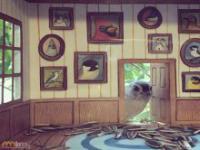 Niecodzienne domki dla ptaków