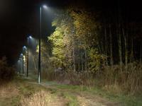 Władze Łodzi oświetliły ścieżkę w lesie.