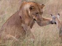 Zwierzęta ratują zwierzęta