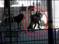 Egipt - Lew atakuje trenera w cyrku
