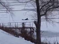 Człowiek ratuje psa który wpadł do zamarzniętego jeziora