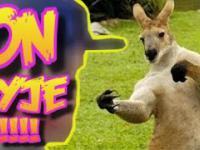 kangur i pies oraz Piston