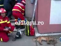 Strażak reanimuje psa