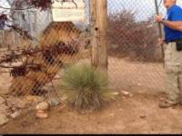 Pierwsza zasada obchodzenia się z lwami