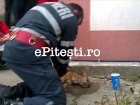 Rumuński strażak reanimuje psa