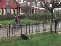 Pies gra w piłkę z przechodniami