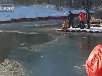 Mężczyzna ratuje psa z zamarzniętego jeziora