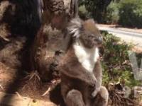 Rozmowa dwóch koali (Krystian & Artur)