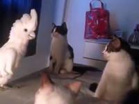 Kiedy papuga dyskutuje z kotami w jednej grupie