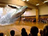 7D hologram wieloryba w sali