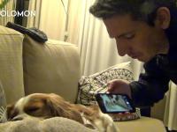 Jak powstrzymać psa przed chrapaniem