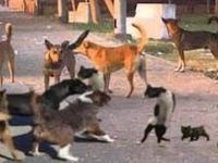 Szalone koty w akcji