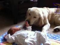 psy i koty chroniące dzieci kompilacja cute zwierząt